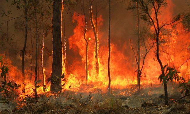 Image result for australia bushfire