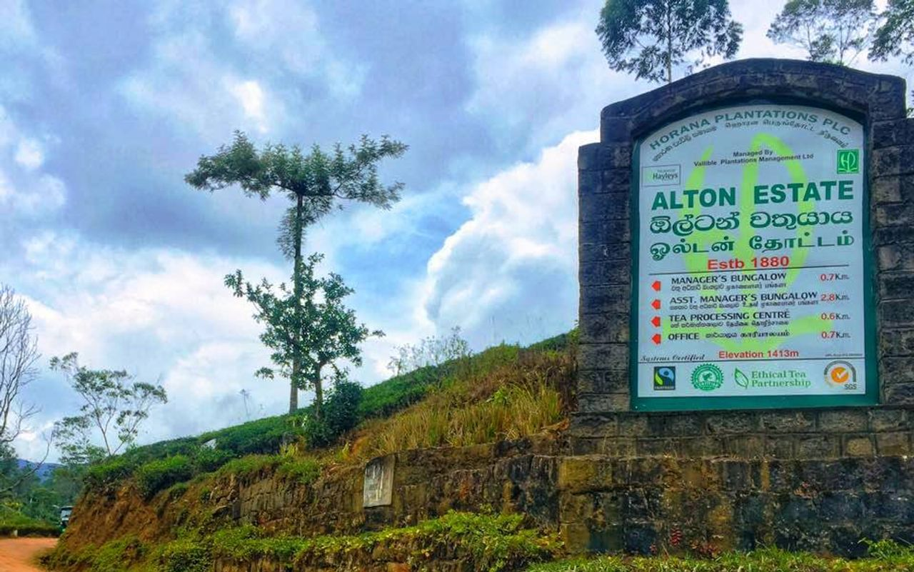 Sri Lankan plantation company terminates 38 Alton estate workers